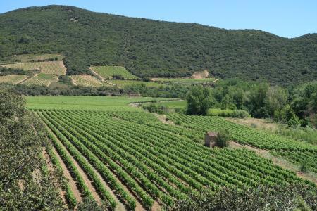 Orb-Tal: Von Cessenon-sur-Orb nach Roquebrun