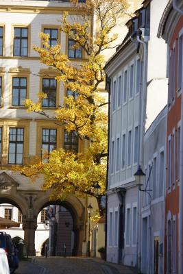 Altstadt, Architektur, Baum, Gasse, gelb, Görlitz, Herbst, Oberlausitz, Pflaster, Rathaus, Schlesien