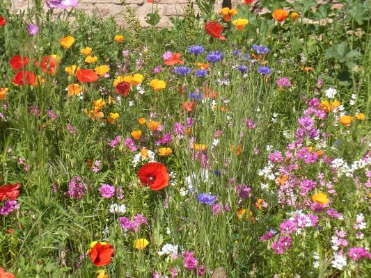 Blume, Frankreich, Midi-Pyrénées, Park, Toulouse