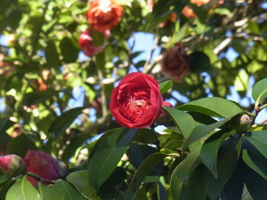 Blume, Frankreich, Pyrenäen, Tarbes