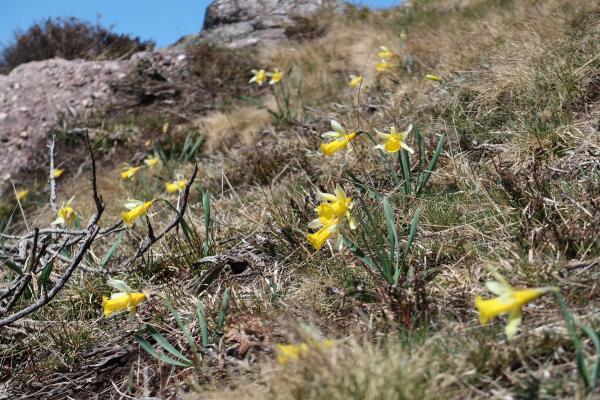 Blume, Frankreich, Pyrenäen
