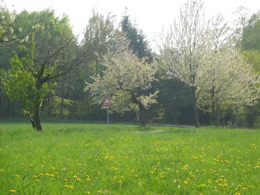 Ausflug, Fahrrad, Oberlausitz, Rammenau