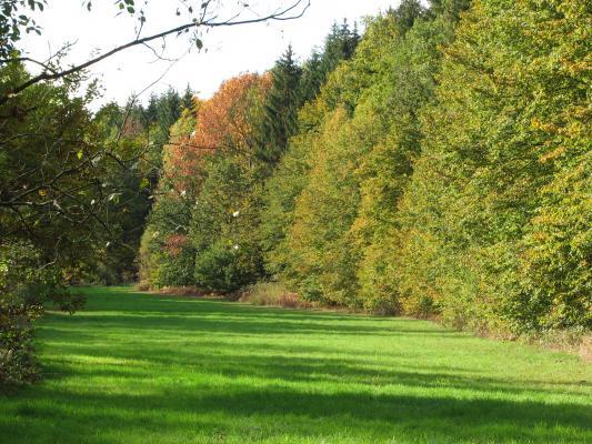 Ausflug, Dresden, Fahrrad, Pflanzen, Landschaft, Tharandt, Tharandter Wald