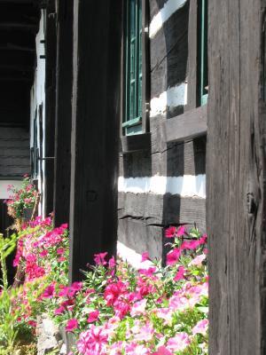 Spree, Umgebindehaus, Fahrrad, Pflanzen