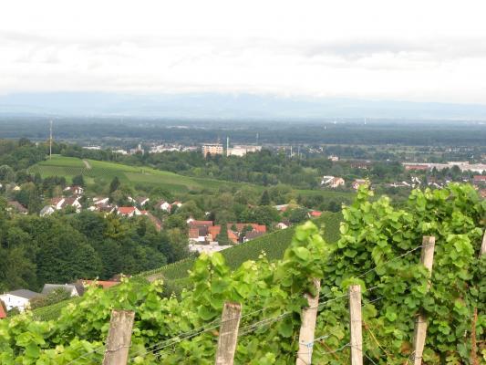 Urlaub, Offenburg, Weinberg