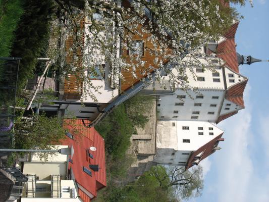 Architektur, Freiberger Mulde, Nossen, Schloss Nossen, Blüten, weiß