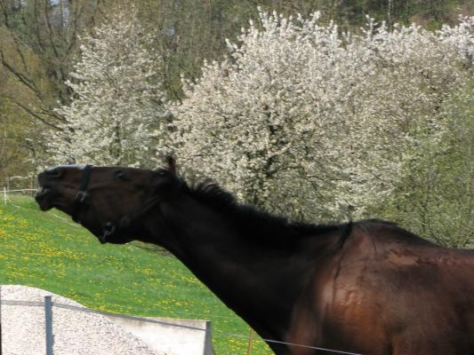 Freiberger Mulde, Pferd, Tiere
