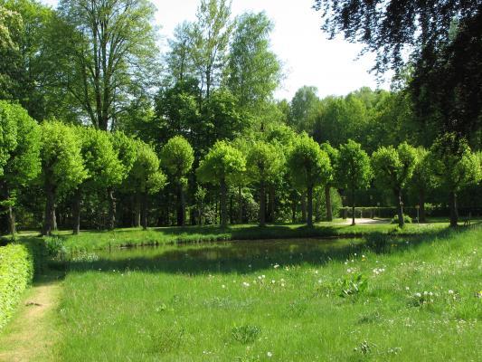 Barock, Großharthau, Grün, Pflanzen