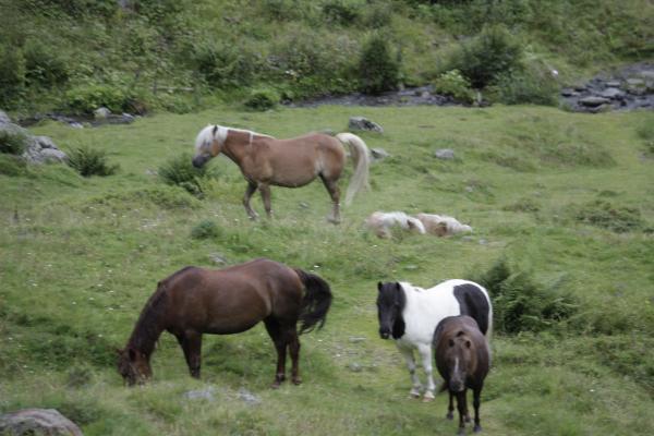 Alpen, Hohe Tauern, Pferd, Schobergruppe, Tiere, Urlaub, Waldwiese, Wangenitztal, Österreich
