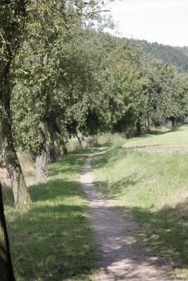 fahrradtour, Wechselburg, Zwickauer Mulde