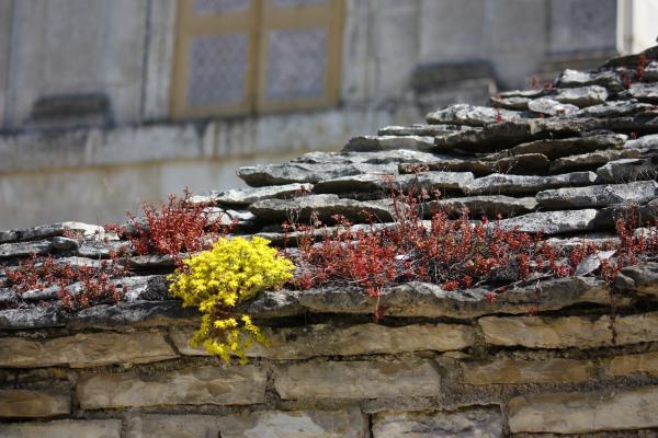 Burgund, Frankreich, Pflanzen, Tanlay, Yvonne