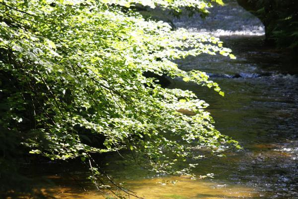 Bach, Kirnitzsch, Pflanzen, Sächsische Schweiz, Wasser