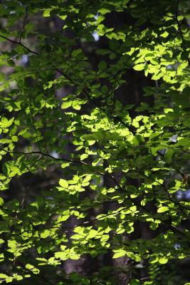 Pflanzen, Sächsische Schweiz, Winterstein
