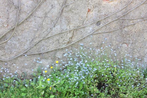 Blumen, Burgenland, fahrradtour, Jahnatal, Sachsen