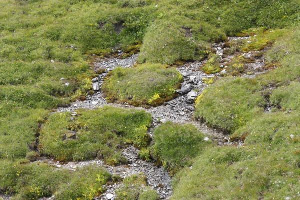 Alpen, Bach, Goldberggruppe, Hohe Tauern, Magernigspitz, Wasser, Österreich