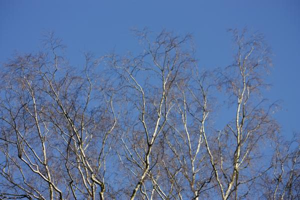 Bäume, grafisch, Lasensteine, Liethenmühle, Papststein, Sächsische Schweiz