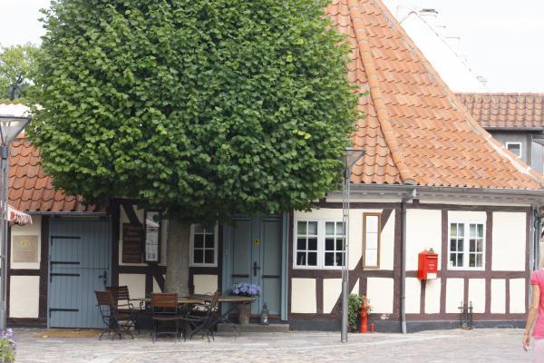 Architektur, Bäume, Dänemark, Odense, Pflanzen