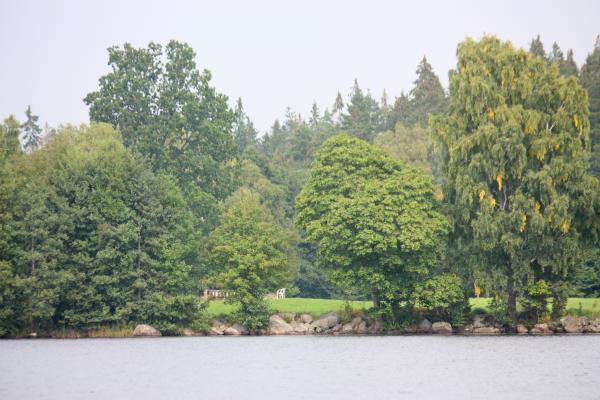 Aby, Kanu, Rastplatz, Schweden, See, Smaland, Värensleden, Wasser, Wiese