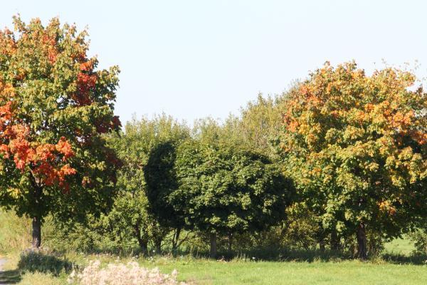 Baum, Herbst, Moritzburg, Sachsen