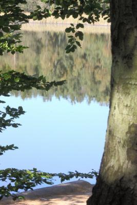 Moritzburg, Sachsen, Spiegelung, Wasser