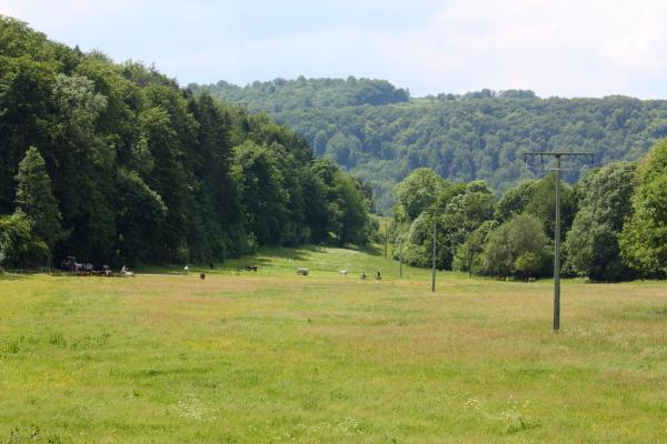 Bäume, Landschaft, Thüringen, Werra
