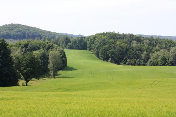 Elbsandsteingebirge, Ottendorf, Sächsische Schweiz, Wandern, Wiese