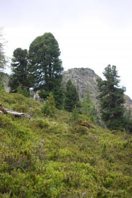 Alpen, Baum, Bärenkopf, Hohe Tauern, Mölltal, Raschboden, Stall, Thörlkopf, Trögertörl, Törlkopf, Österreich