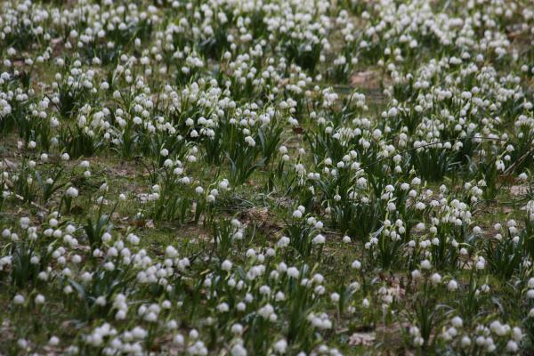 Blumen, Polenztal, Sächsische Schweiz, Wiese