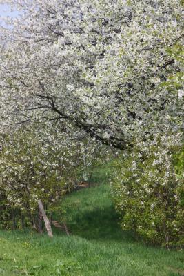 Frühling, Schönfelder Hochland