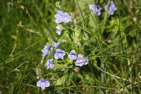 Blumen, Ottendorf, Sächsische Schweiz