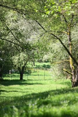 Bäume, grün, Kirnitzschtal, Sächsische Schweiz