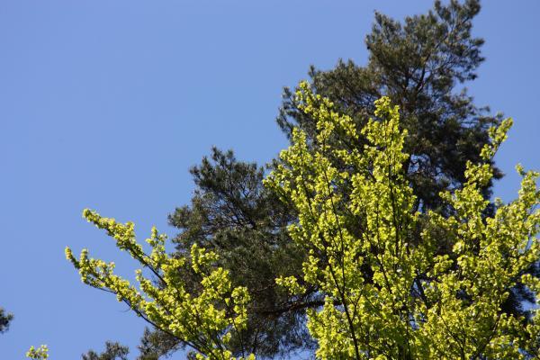 Bäume, grün, Sächsische Schweiz