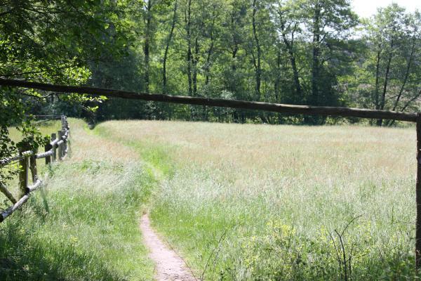 Landschaft, Lüneburger Heide