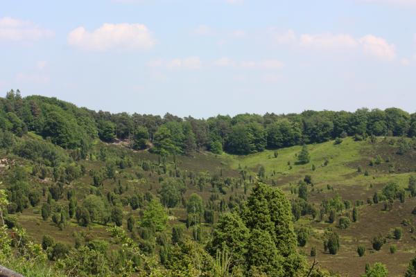 Landschaft, Lüneburger Heide, Wacholder
