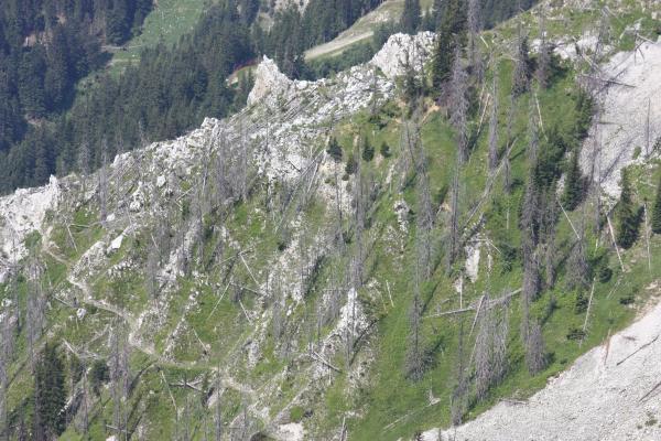 Abfahrt, Champagny-le-Haute, Frankreich, Pointe Veliere, Ski, Vanoise, Waldschaden