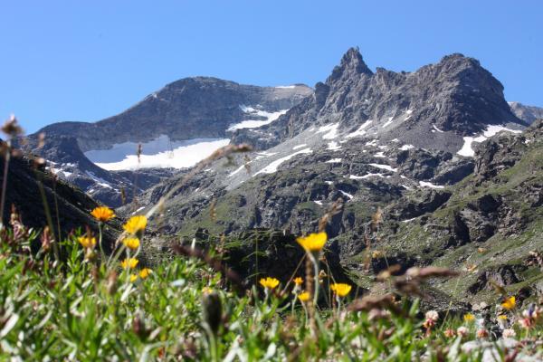 Blumen, Bramans, Frankreich, Gipfel, Haute-Savoie, Vanoise