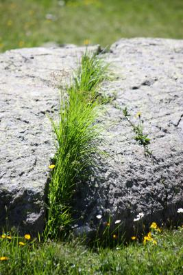 Bramans, Frankreich, Haute-Savoie, Pflanzen, Steine, Vanoise