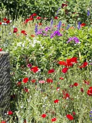 Blumen, bunt, farbig, Kleinhennersdorf, rot, Sächsische Schweiz