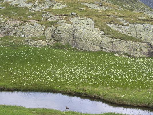 Bergsee, Gradental, Nossberger Hütte