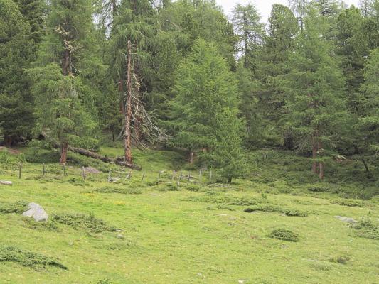 Mitten und Umgebung, Stanziwurten, Waldwiese, Wiese, Österreich