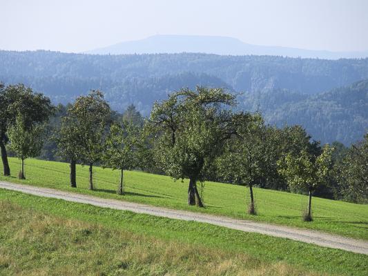 Hinterhermsdorf, Sachsen, Sächsische Schweiz, Wachberg
