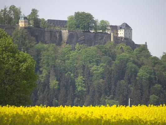 gelb, Königstein, Lilienstein, Sächsische Schweiz