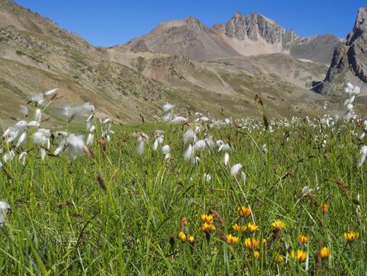 Blumen, Clarèe, Frankreich, Hautes-Alpes