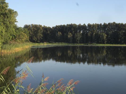 Abendsonne, Teich