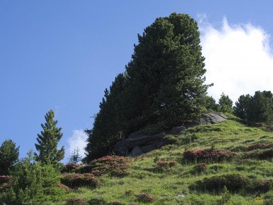 Alpen, Mitten und Umgebung, Stanziwurten