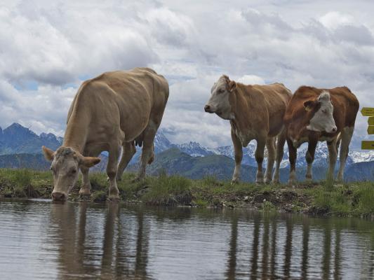 Alpen, Bergsee, Dachskofel, Drautal, Gasthof Bergheimat, Irschen, Kuh, Mitten und Umgebung, Taxkofel, Wasser, Österreich
