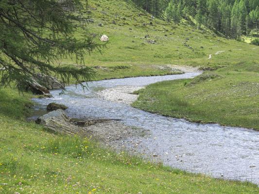 Alpen, Asten, Astner Moos, Bach, Mitten und Umgebung, Wasser, Österreich