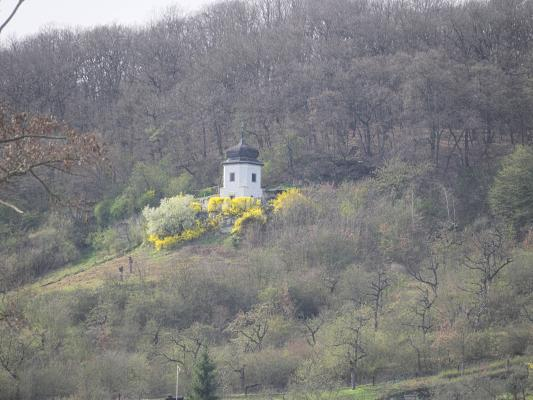Blüte, gelb, Kirche, Saale Unstrut, weiß
