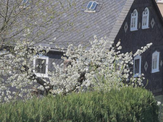 Bahnradweg, Blüte, Frühling, Oberlausitz