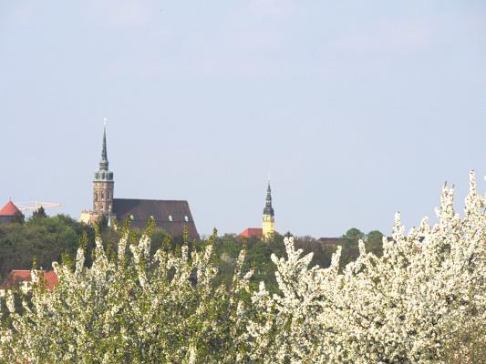 Blüte, Frühling, Oberlausitz